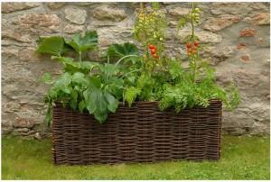 Trädgård får helt enkelt bli mitt nya intresse